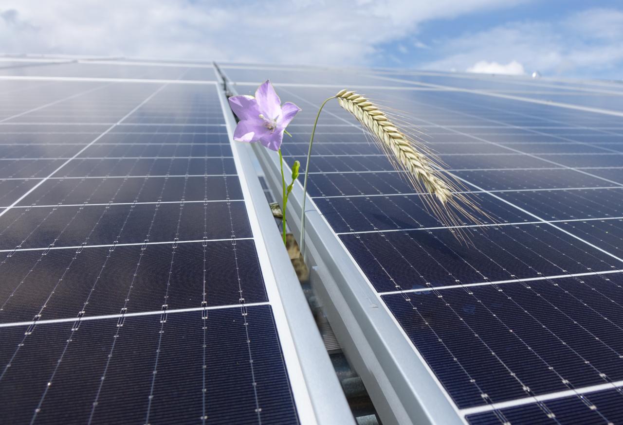 Network AgriPVplus  - Linking biodiversity strategies to agrivoltaics