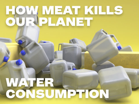 How Meat Kills Our Planet – Water Consumption